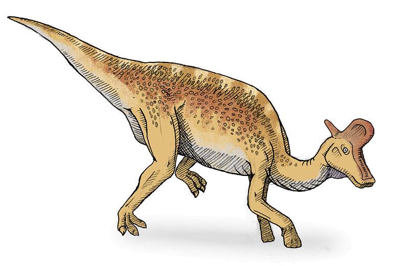 Old Earth Ministries Dinosaur Curriculum