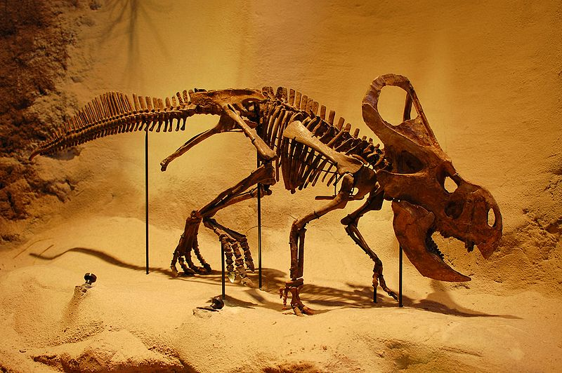 Velociraptor Quick Facts Old Earth Ministries O...